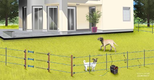 cloture pour chien sans collier