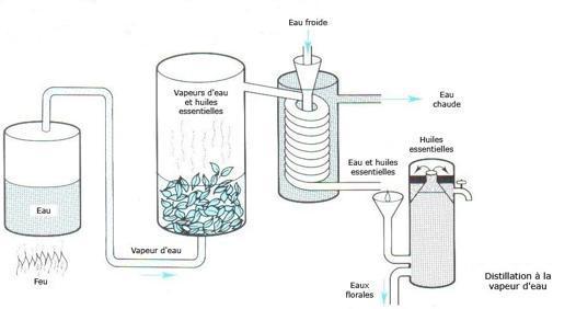 comment faire huile essentielle