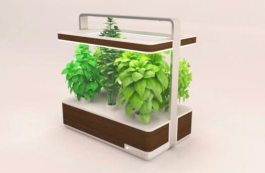 jardin aromatique intérieur