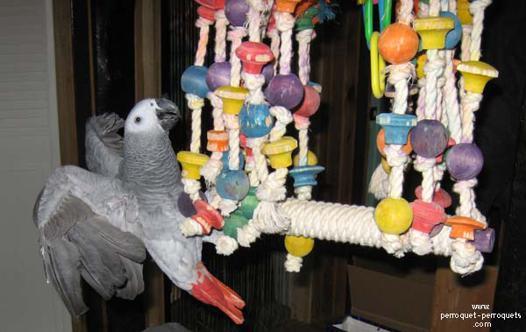 jouet perroquet pas cher