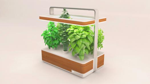 kit plante aromatique interieur