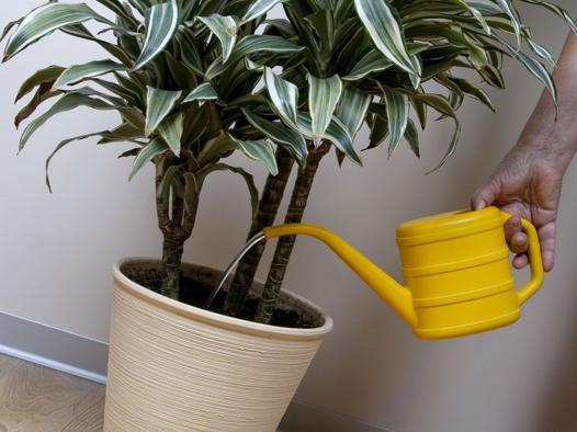 les meilleures plantes d intérieur