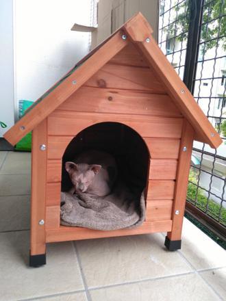 petite niche pour chat