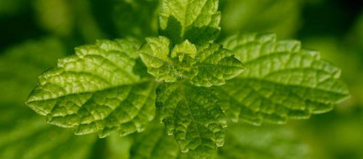 plante pour se detendre