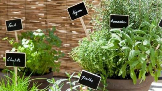 planter des plantes aromatiques