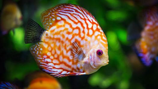 poisson pour aquarium