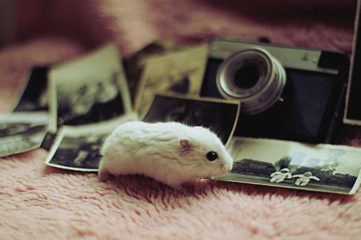 vintage hamster
